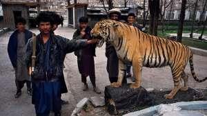 باغوحش کابل در چنگ وحشیان انساننما